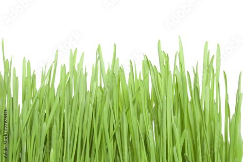 Deurstickers Gras Green Grass