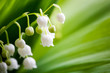 canvas print picture Lily of the valley