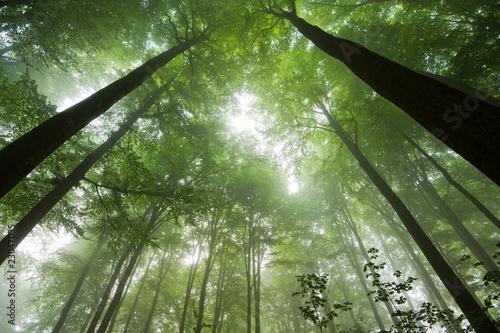 Recess Fitting Bamboo Wald im Nebel