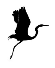 Silhouette Of A Flying Up Heron