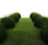 zielona droga #2