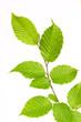 Leinwandbild Motiv grüne blätter