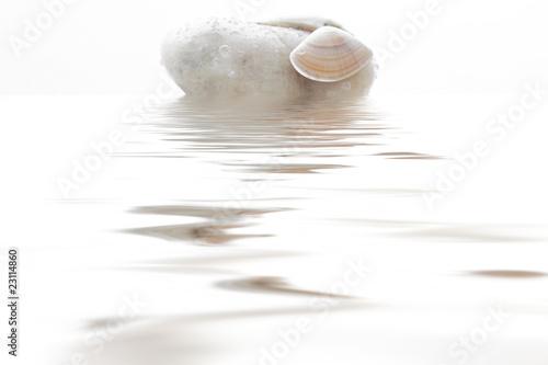 Photo sur Plexiglas Zen pierres a sable Coquillage & galet