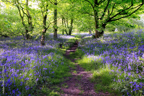 Printed kitchen splashbacks Forest Blue bells forest