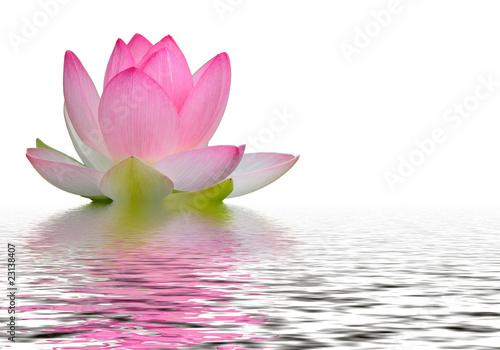 Staande foto Lotusbloem reflet fleur de lotus
