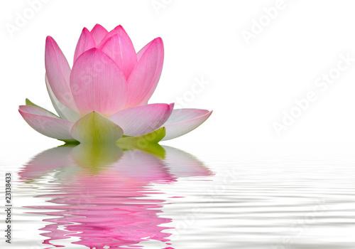 Foto op Canvas Lotusbloem reflet fleur de lotus
