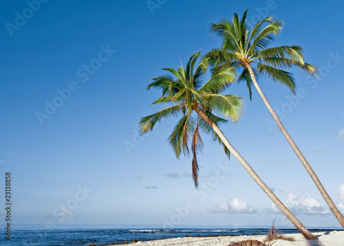 Deurstickers Strand beach with coconut palm on tropical island