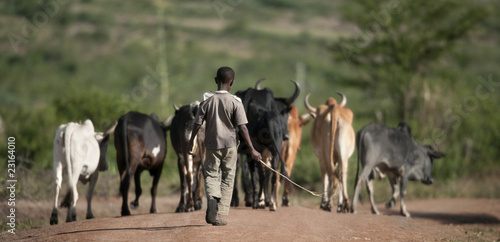 Poster Afrique Rear view of boy with herd of cattle, Serengeti National Park