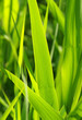 canvas print picture - Gräser Nahaufnahme - Grass Closeup