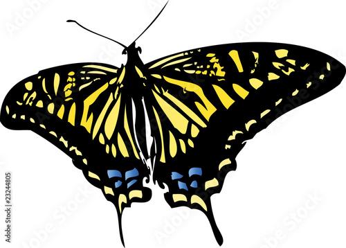 Valokuva swallowtail
