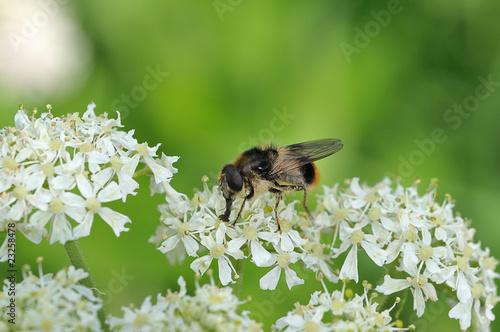 Photo Insecte 1