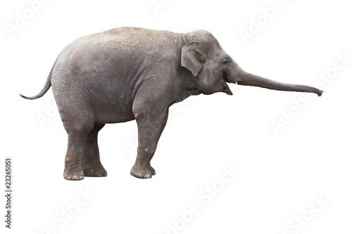 Photo sur Toile Elephant éléphant