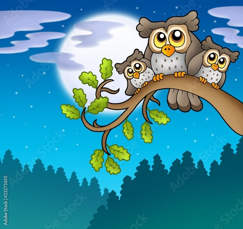 La pose en embrasure Forets enfants Cute owls on branch at night