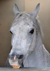 White Horse Face II