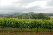Vineyard North Georgia