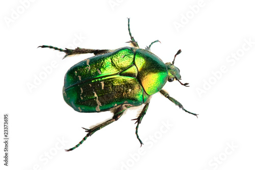 Valokuva Rose chafer (cetonia aurata) isolated on white background