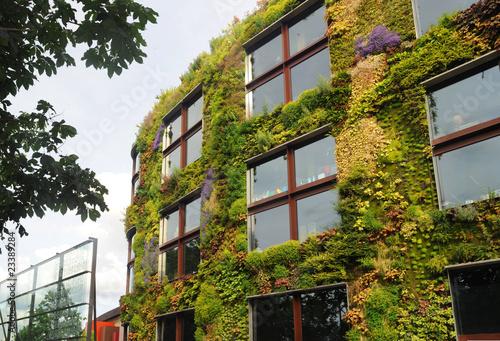 Fotografie, Obraz  façade végétale - mur vert