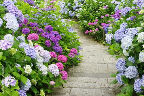 Foto auf Gartenposter Hortensie hydrangea