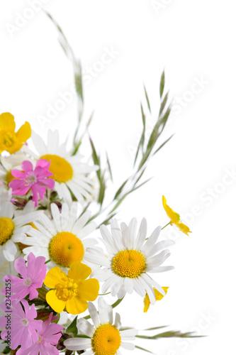 Plakat piękne kwiaty