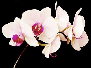 Panel Szklany Egzotyczne orchidea