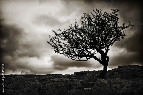 Valokuvatapetti windswept tree wallpaper