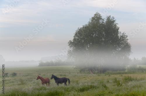 Duett im Nebel