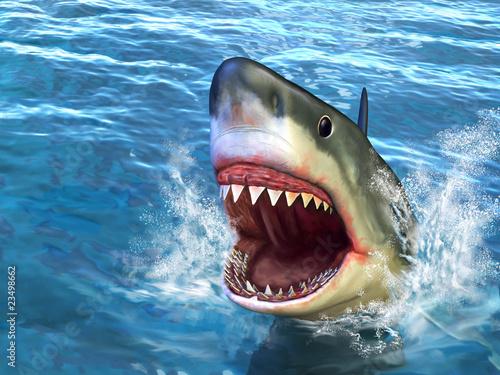 Photographie Attaque de requin