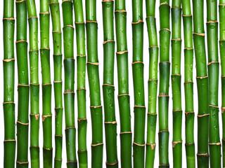 Fototapeta Na stół i biurko bamboo on white