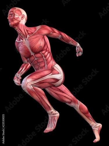 Muskelmodell - Mann – kaufen Sie diese Illustration und finden Sie ...