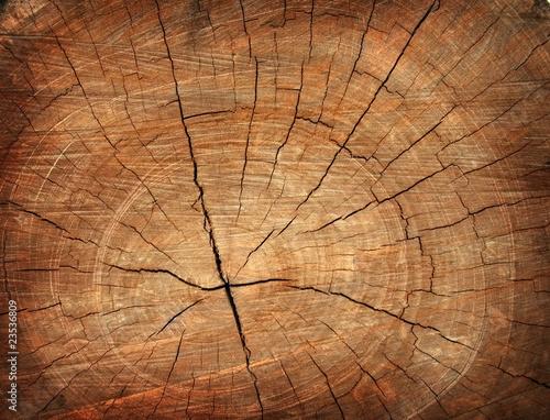 Fototapeta premium tło pnia drzewa