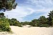Trees on dune.