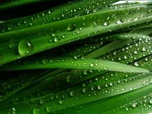 Grass With Rain Drops Macro