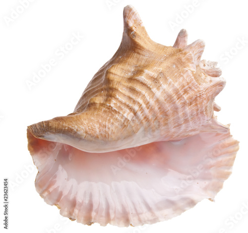 Fotografiet Conch Shell
