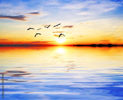 Fototapety, obrazy: los pajaros el el sol