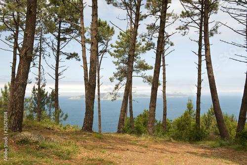 Fototapeta View through trees to Cies Islands Vigo Galicia Spain obraz na płótnie