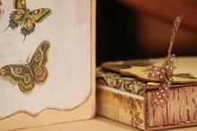 Scapbook Et Papillon