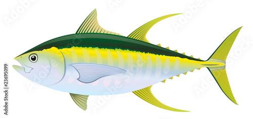 Fotografie, Obraz Yellowfin Tuna