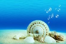 Seashells With Underwater Background.
