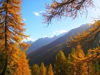 Obraz na Szkle Góry Forêt de mélèzes en automne