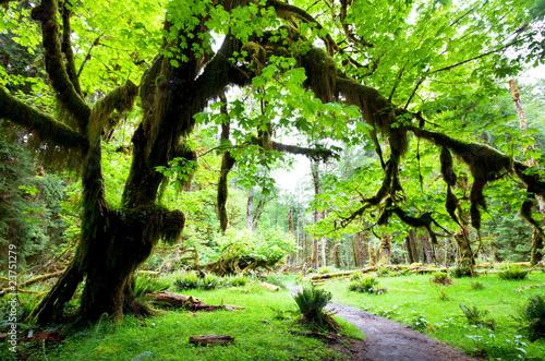 Naklejki dżungla  drzewo-w-dzungli