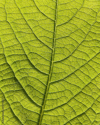 Garden Poster Decorative skeleton leaves blatt vom baum