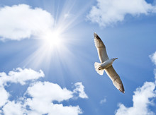 Seagull Under Bright Sun