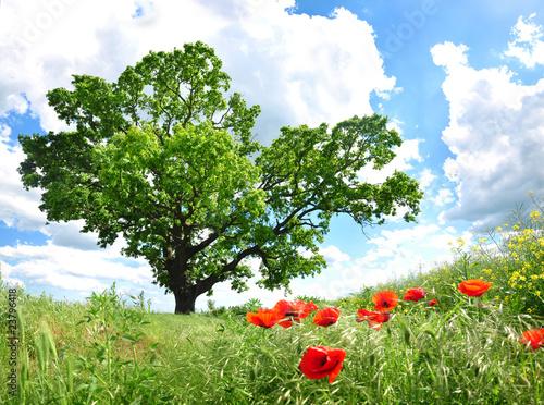 Foto op Plexiglas Blauwe hemel Tree and poppy