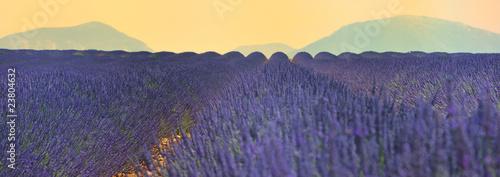 Photo Stands Lavender lavande et valensole