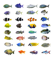 Great Tropical Fish Collection...