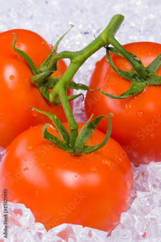 Poster Dans la glace Tomatoes on ice
