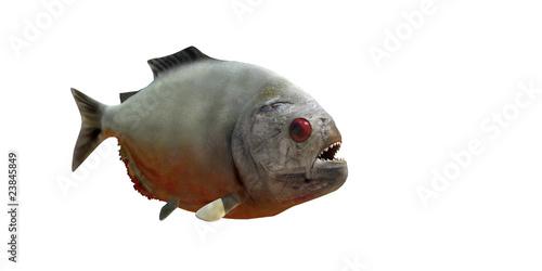 Fotografie, Tablou piranha v2