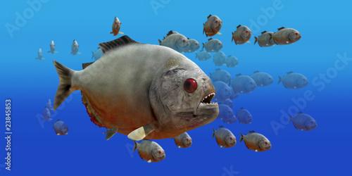Fototapeta  piranha v3