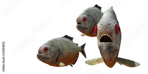 Fototapeta piranha v4
