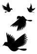 Leinwandbild Motiv Vogelsilhouetten (mit Clippfad)